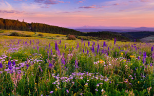 луговые травы